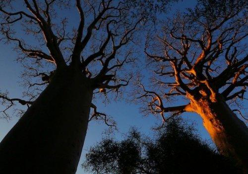 Baobabs, entre terre et mer, à la rencontre des Vezos, (Madagascar) - 22h30
